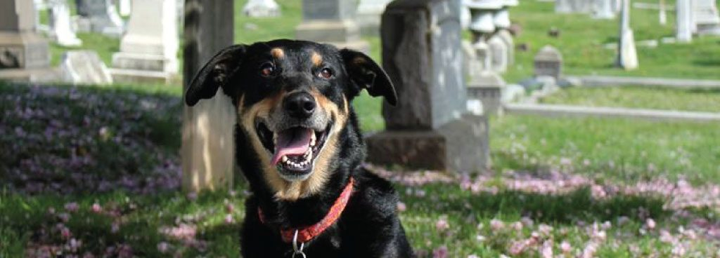 cemetery-dogs-volunteer